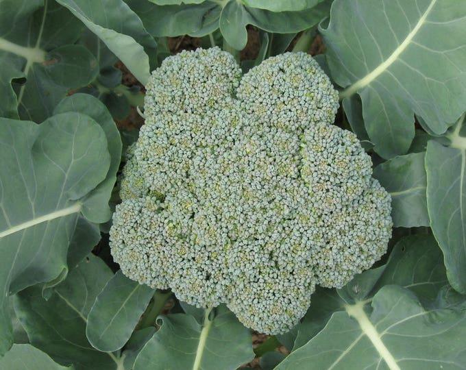 1000 WALTHAM 29 BROCCOLI Brassica Oleracea Vegetable Seeds