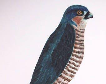 Sparrowhawk Print