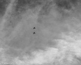 Black and White Flight