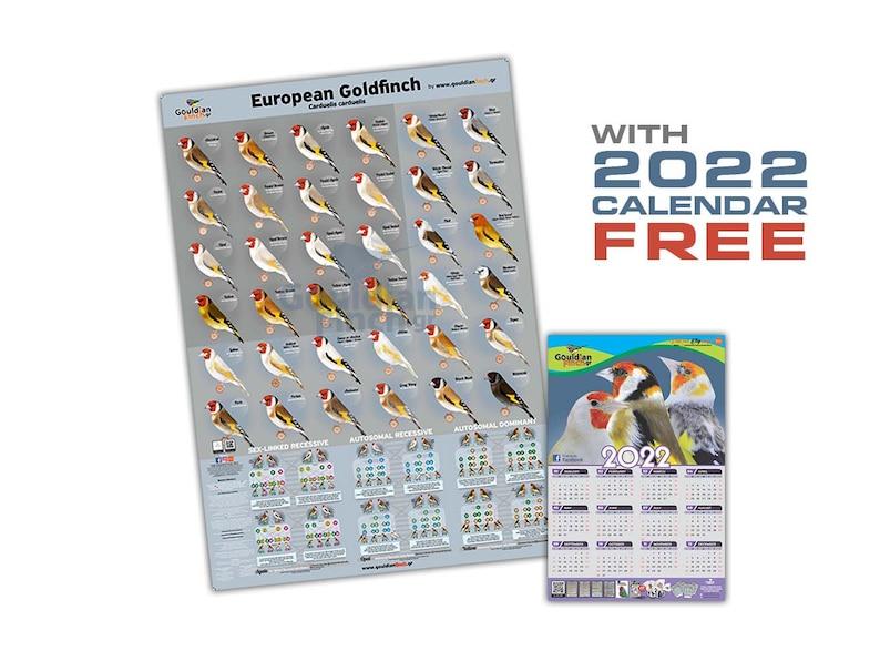 NEW European Goldfinch Mutation Poster  2022 European 1 poster