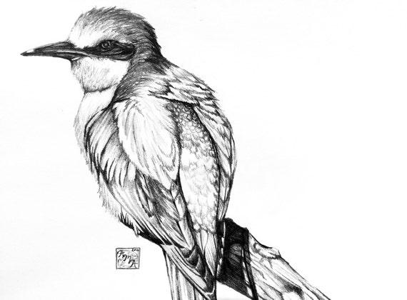 Bird Sketch Print Etsy
