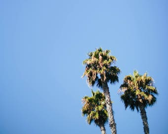 Palm Trees in San Luis Obispo California