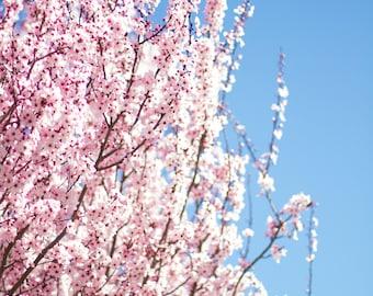 Flower Tree in Sonoma