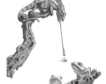 Hungry Fellas, chameleon, frog, lunch, competition, amphibian, reptile, long tongue, reptile art, chameleon drawing, by Mitchell McClosky