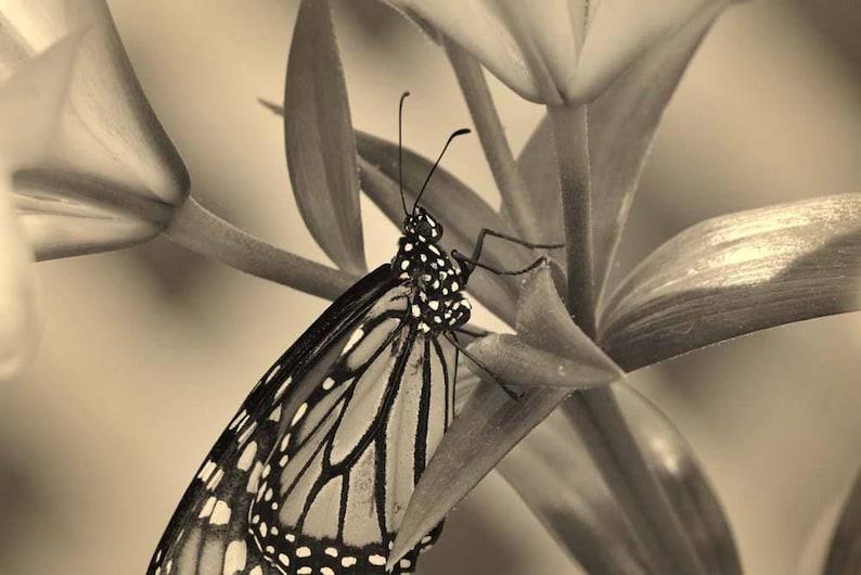 Butterfly Photo Macro Photography Wildlife Photo Nature image 0