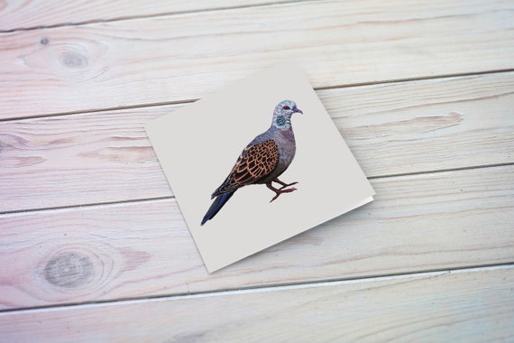 Turtle Dove Eco Friendly Illustrated Greetings Card