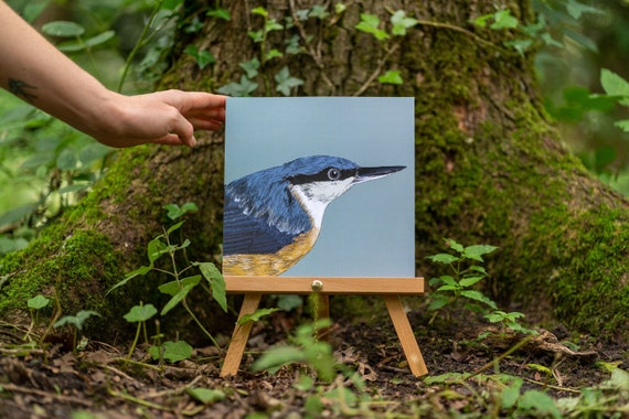 Nuthatch Close Up Illustration Eco Friendly Print . Bird Lovers Plastic Free Gift.