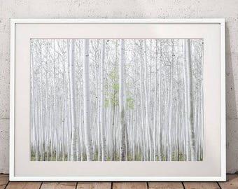 Forest Wall Art, Nature Art, Landscape Photography, Birch Forest Poster Large Wall Art Prints Printable Art Digital Download Digital Prints