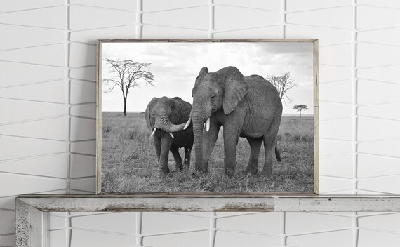 Elephant Poster Elephant Decor Animal Print Africa Print Black And White Photography Prints Printable Wall Art Large Wall Art Prints