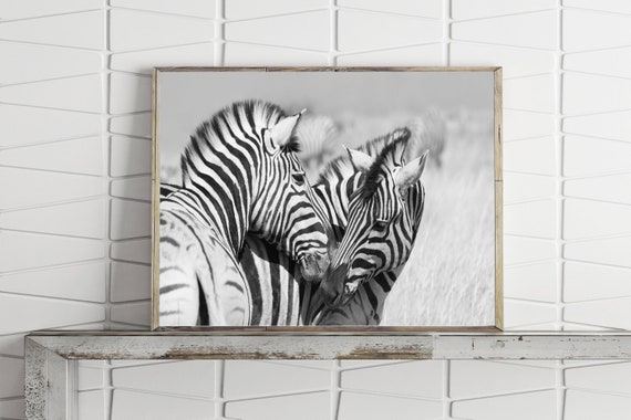Zebra Print Zebra Printable Wall Art Animal Print Black And White Nature Photography Prints Downloadable Prints Large Wall Art Prints