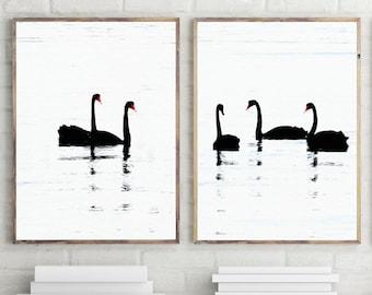 Bird Prints Set of 2, Swan Decor, Large Wall Art Prints, Black and White Bird Art, Bird Photography, Digital Prints, Swan Photo Set Download