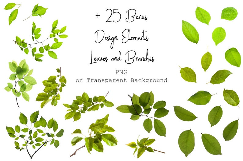 120 Green nches Overlays - Spring Overlays - Tree nches - Spring Background on