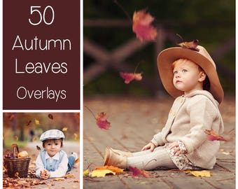 50 Autumn Leaves Overlays - PNG - Transparent Background -  Leaves Clip Art - Fall Overlay - Red - Gold - Brown - Linden - Maple - Birch