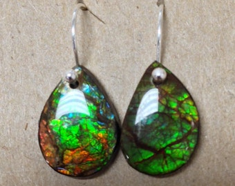Fossil Ammolite and Sterling Silver Earrings Handmade by Chris Hay