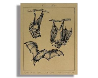 Bat Print - Bats Scientific Illustration - Vintage Print - Vintage Bat Print - Bat Poster - Bat Goth Decor - Gothic Home - Creepy Decor