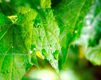 Green Rain, Photography, Home Decor
