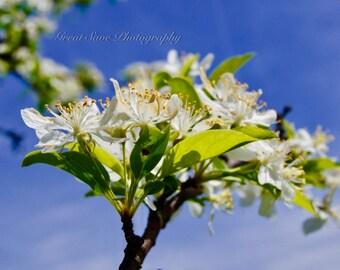 White Pollen, Photography, Home Decor