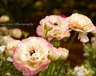 Pretty Pink, Photography, Home Decor