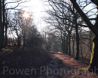 Landscape Photograph, woodland muddy trail lined with sun soaked trees casting shadows out towards the photo, sun flare through branches