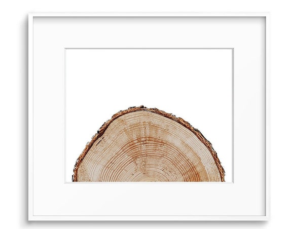 Oak Tree Rings, Oak Print, Minimalist Print, Large Wood Print, Cut Log Prints, log , Bark Print, Tree Rings Poster, Tree Rings Printable