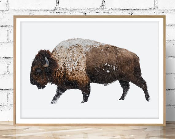 Buffalo Print, Bison Print, Large Wall Art Print, Animal Prints, Animal Poster Art, Living Room Art, Boys Bedroom Decor, Farmhouse Decor