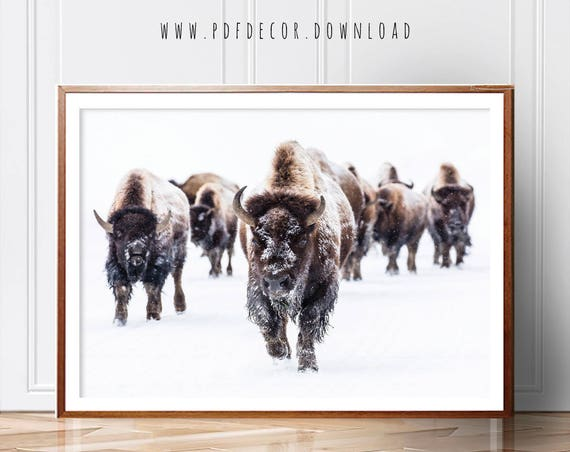 Bison Wall Art, Buffalo Print, Animals Print, Wall Art, Nursery Decor, Nursery Wall Art, Animals Art, Art prints, Contemporary, Nursery Art