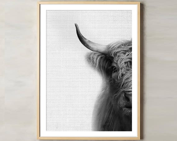 Bison Print, Highland Cow Art, Animal Print, Black White, Large Poster, Cow Photo, Animal Photography, Bison, Buffalo Print, Animal Prints