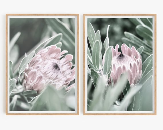 Protea Print, Printable Wall Art Poster Set of 2 floral prints Pink Floral, Botanical, Bedroom Decor, Native Flower Photography, Australian