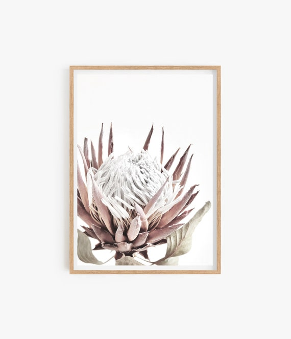 Protea Print, Floral Wall Art, Printable Botanical Poster, Digital Download, Australian Native Photography, Pink Flower Decor, Native Print