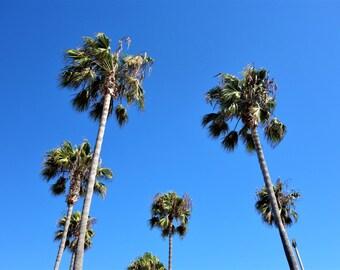 Summer Palm Trees Photograph / Digital Download / Summer Photograph / Palm Trees Poster / Palm Trees Canva / Summer Canva / Printable Photo