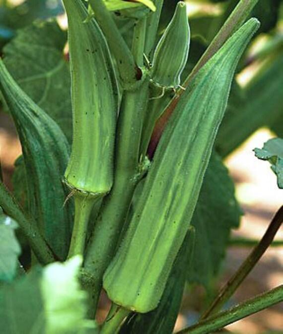 50 Organic Okra Seeds Heirloom Non Gmo Clemson Etsy