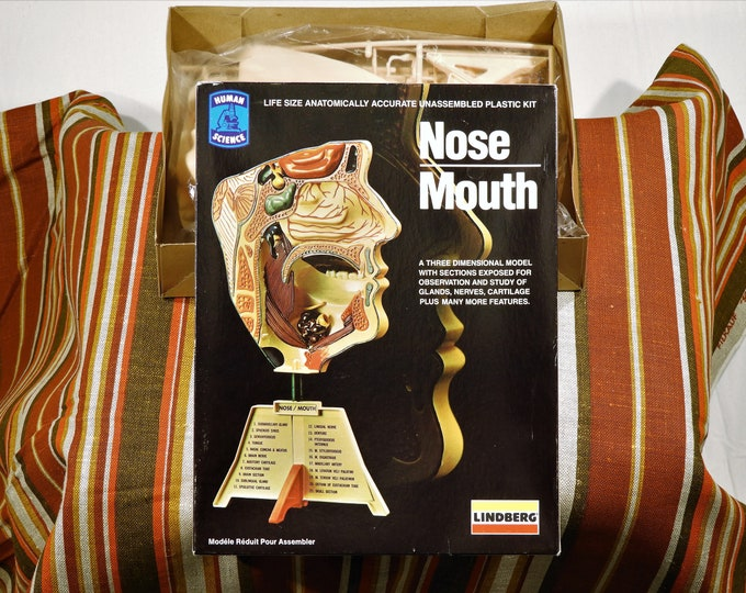 Vintage Nose Mouth Model, 1982 Lindberg, Anatomically Accurate, Unassembled Plastic Kit, Original Stickers & Instructions, Classroom Decor
