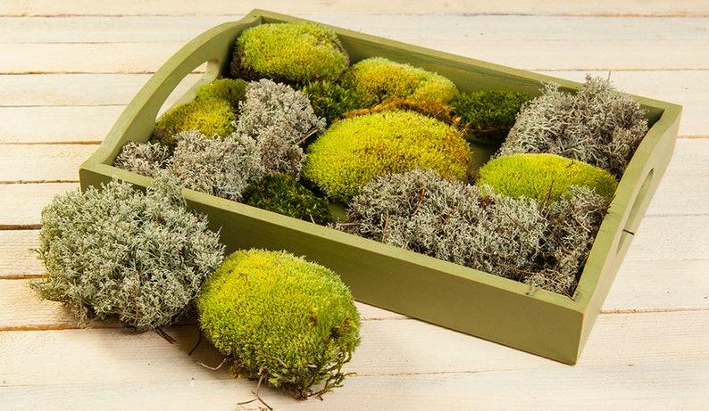 Three Type Of Real Natural Moss Set For Terrarium Florarium Etsy