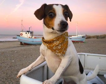 """Liberty Capel Curry Dog Bandana collar 3/4"""" (18 mm). Yellow floral print designed by Liberty London. Silver or golden brass hardware"""