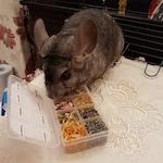 Healthy Chinchilla Treats Sampler Pack