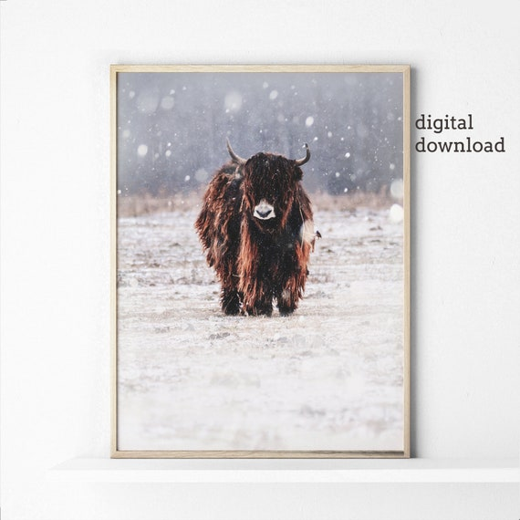 Winter Wall Art Farmhouse Decor, Highland Cow Poster Photography Prints Digital Download, Bohemian Wall Prints, Modern Home Decor, Printable