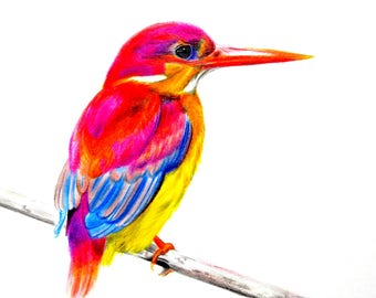 Colorful bird, drawing