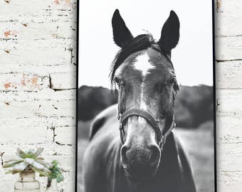 Instant Download Printable Art, Black and White Photography, Black and White Horse Photo   {DIGITAL PRINT}