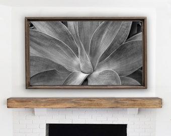 Samsung Frame TV Art. Black & White Photography. Succulent Plant Art Print for The Frame TV.