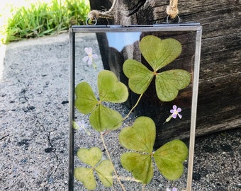 Clover and Pink flower Pressed Flower Art, glass float frame