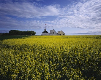Three old churches and a field of Canola in the Qu'Appelle Valley, Saskatchewan