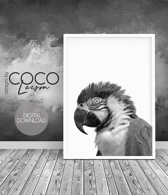 Parrot Wall Art Tropical Bird Print Grey Photo Large Kids Etsy