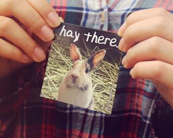 "3"" hay there pun kawaii nikusagi dutch bunny rabbit humor fridge locker magnet"