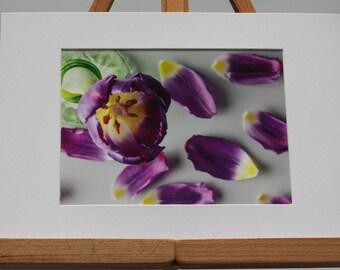 Purple tulip in bottle with fallen petals