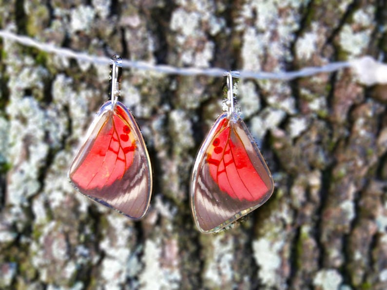 Real Butterfly earrings real preserved laminated resining Butterfly ear dangles 925 sterling silver Agrias Claudina Lugens