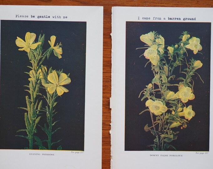 Featured listing image: Set of 2 Vintage Botanical Prints (1917)