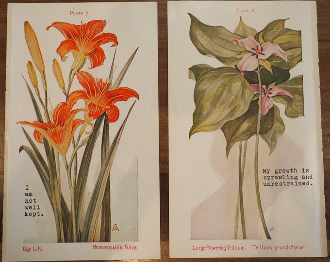 Featured listing image: Set of 2 Small Vintage Botanical Prints (1927)