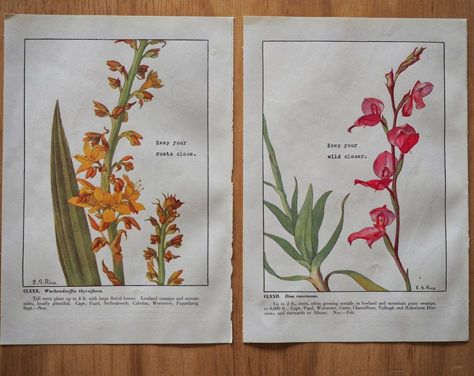 Featured listing image: Keep your roots close... - Set of 2 Vintage Botanical Prints (1950) with Original Poetry