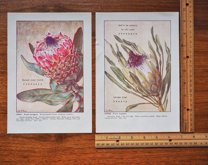 Featured listing image: DISCOUNT! Set of 2 Vintage Botanical Prints (1950)