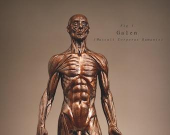 Galen (Musculi Corporis Humanis)